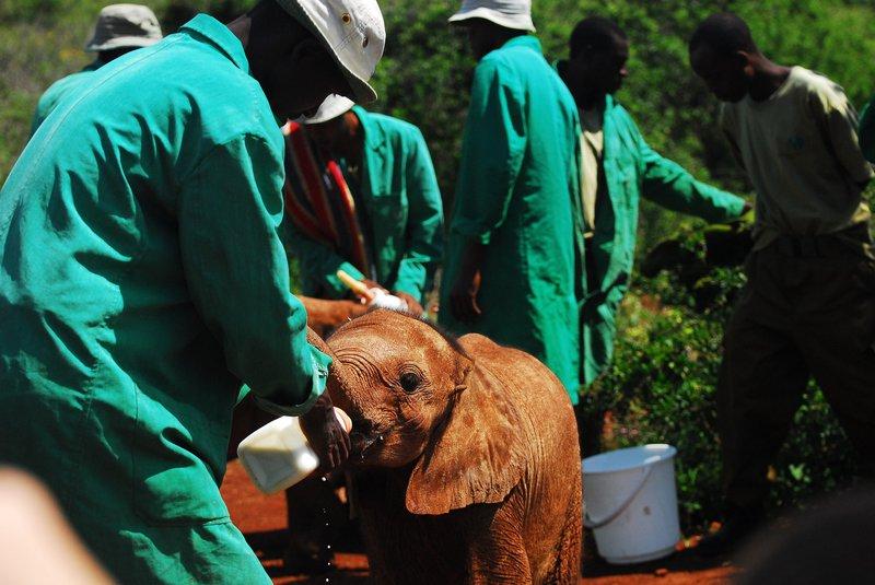 feeding-baby-elephants-4734529_1920.jpg
